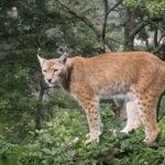 Gli animali selvatici dell'Abruzzo